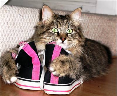Shoes and Cat